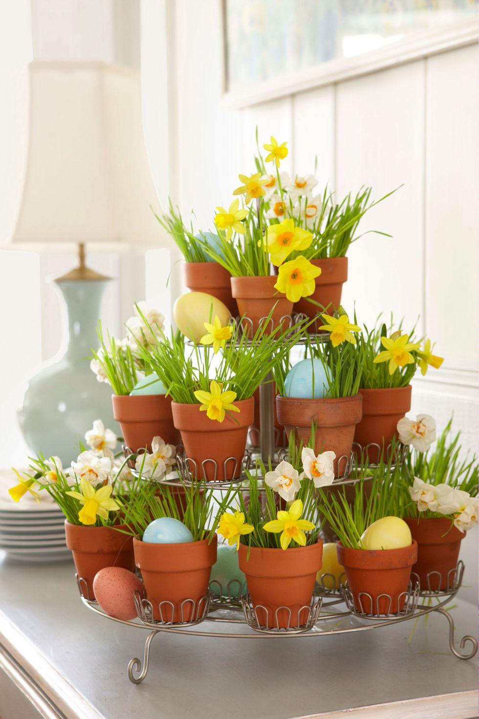 5500418ee99aa-daffodil-decoration-cupcake-tray-0410-zphg1k-s2